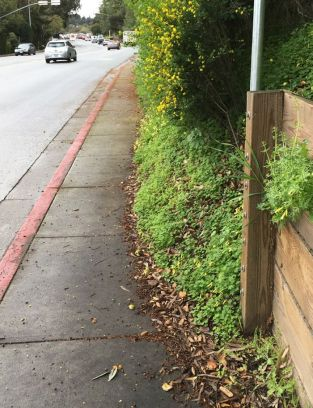 Westside Sidewalk issue - btw Oak Hollow - Campo Bello